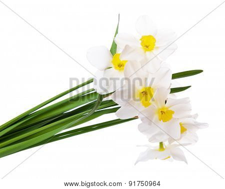 Beautiful bouquet of daffodils isolated on white