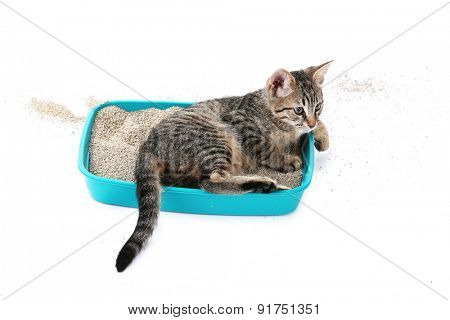 Cute kitten with tray of sand isolated on white