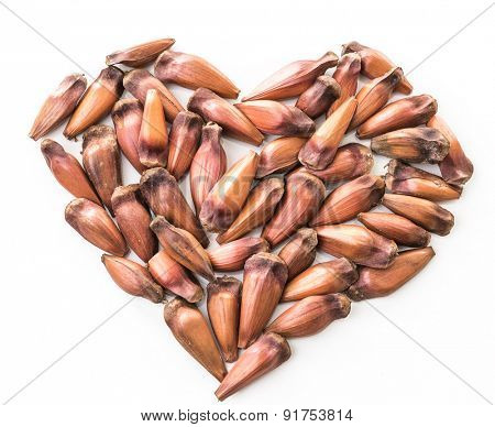 Heart of Brazilian pine (Pinhao)