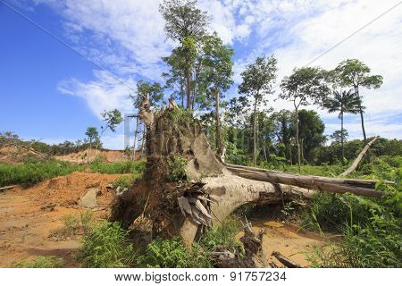 Deforestation environmental destruction of rainforest