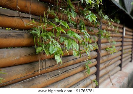 Fence Planks With Climbing Plants