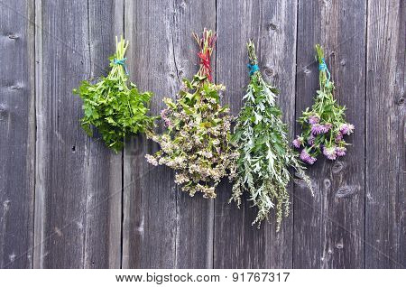 Various Summer Time Medical Herbs On Old Wooden Wall