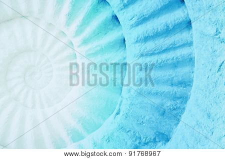 Color Of Ammonite Prehistoric Fossil.