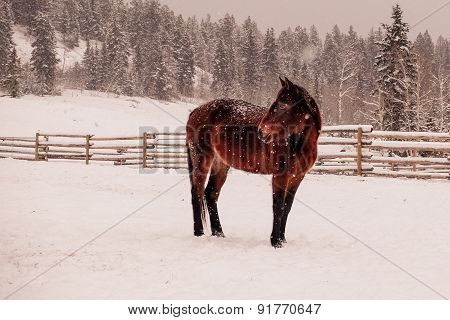 lonely horse