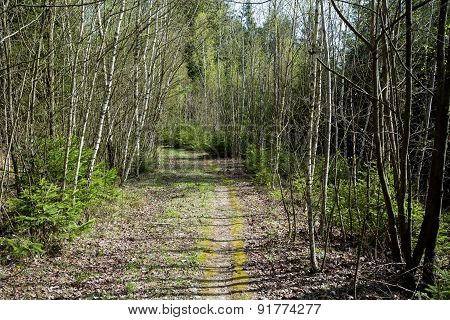 Spring Shot Of Pathway In Small Young Forrest