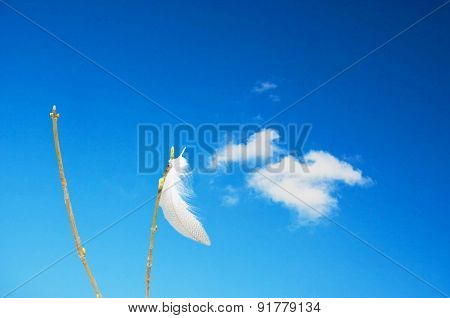 Spring On Blade Of Grass In Front Of Blue Sky