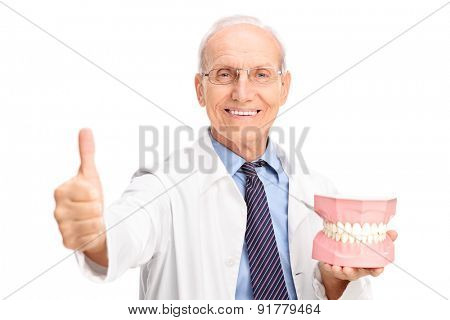 Mature dentist holding a big denture and giving a thumb up isolated on white background