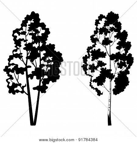 Trees, birch and symbolic silhouette