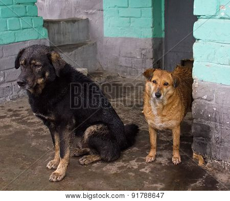 Two Stray Dogs Hide From The Rain