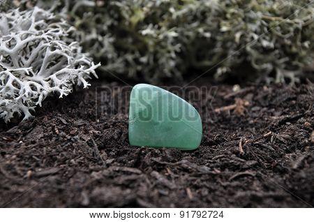 Avenutrin On Forest Floor