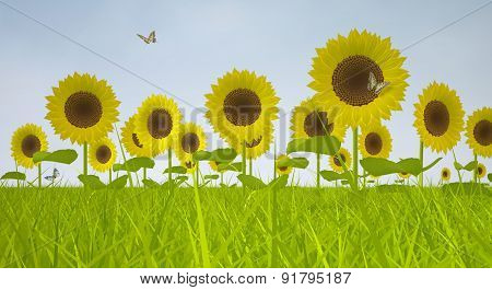 Blooming Sunflowers