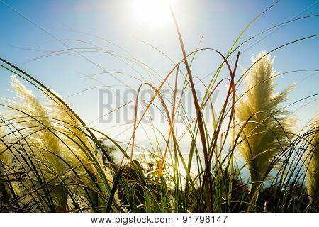 Vegetation in the sun