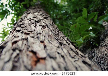 Close up of a tree with a narrow depth of field at cold weather