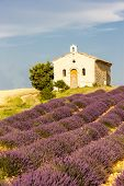picture of plateau  - chapel with lavender field - JPG