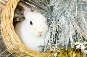 pic of tawdry  - white rabbits in basket against trumpery on green - JPG