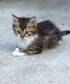 picture of snatch  - Cute kitten sitting and looking  - JPG