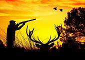 image of hunters  - hunter in the field - JPG