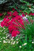 stock photo of garden eden  - A beautiful corner of a flowery garden in the spring - JPG