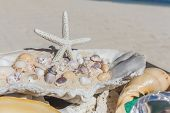 picture of shells  - wedding ring on sea shell as wedding decoration details - JPG