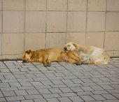 pic of stray dog  - Stray dogs bask in the sun - JPG