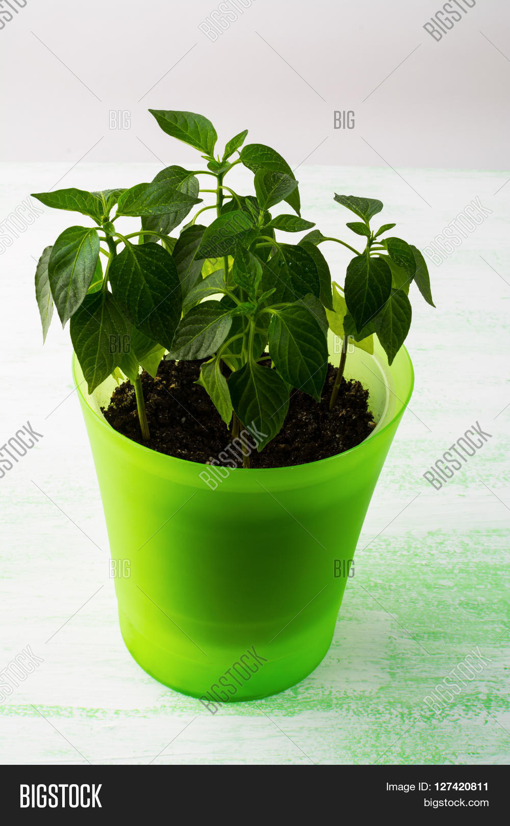 Young Plants In Plant Pot Vertical Green Leaf Ecology