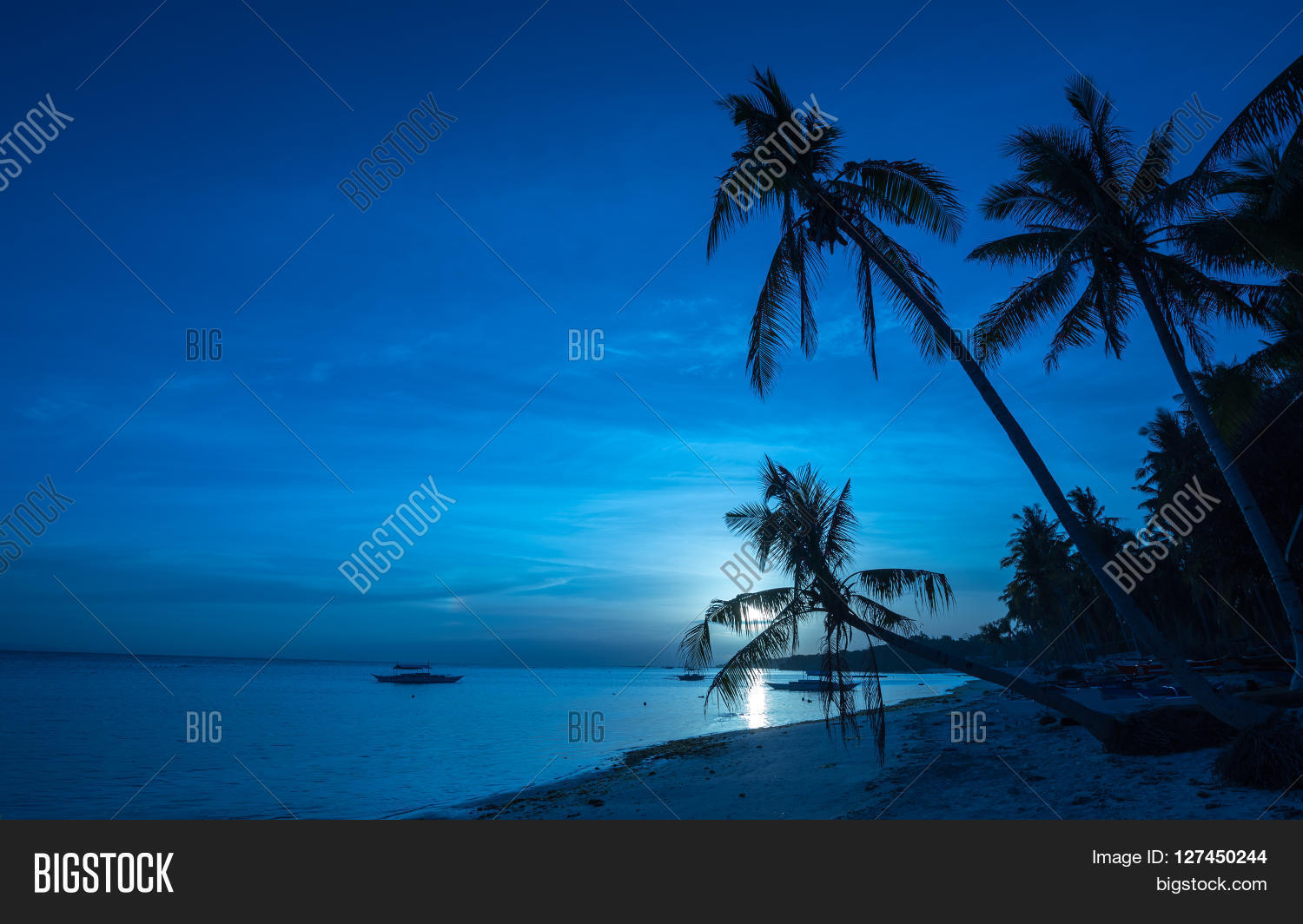 Tropical Beach Background Night Image & Photo | Bigstock