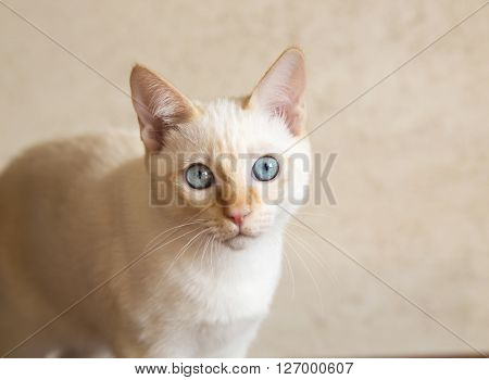 Young cat looks directly at the camera