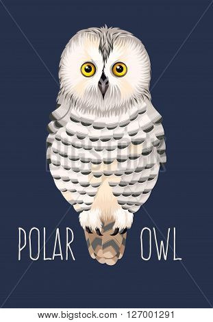 Vector illustration of high detailed cute polar owl
