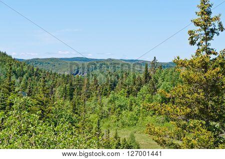 Forest Landscape. Newfoundland