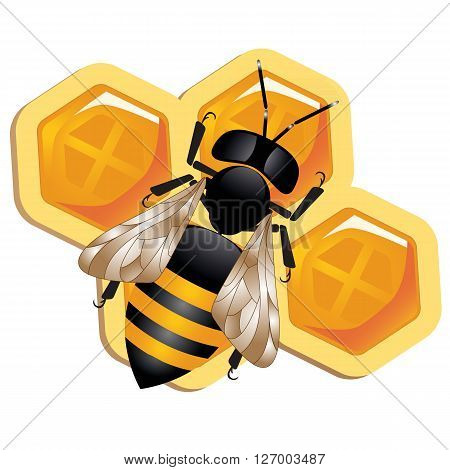 a colorful illustration of a honey bee on a honeycomb