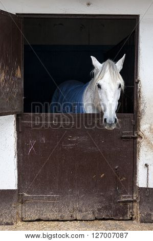 White horse inside its stable with the door closed ** Note: Visible grain at 100%, best at smaller sizes