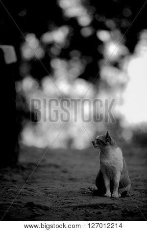 BW shot of lazy cat in the garden.