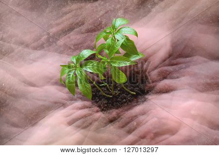 green seedling growing surrounded by hands in a blurred state