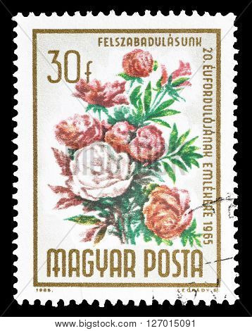 HUNGARY - CIRCA 1965 : Cancelled postage stamp printed by Hungary, that shows Peonies.