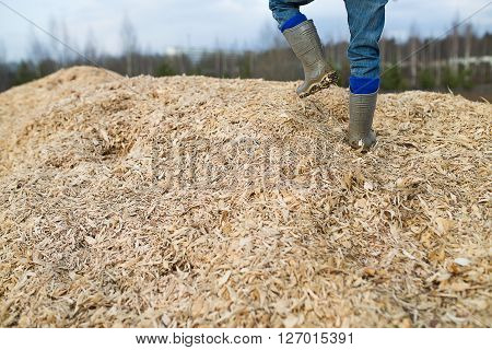 Child Walks On A Mountain Of Sawdust And Wood Chips
