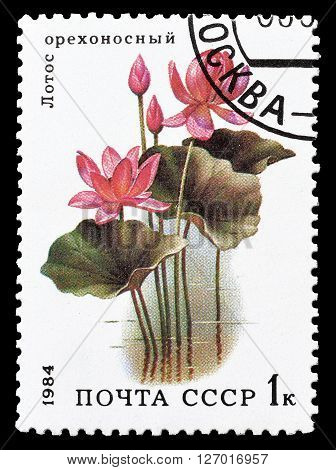 SOVIET UNION - CIRCA 1984 : Cancelled postage stamp printed by Soviet Union, that shows Lotus flower.