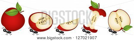 Scalable vectorial image representing a apples being carried by ants, isolated on white.
