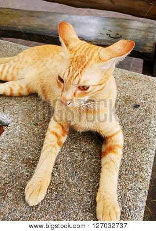 Close up of an orange cat on the ground