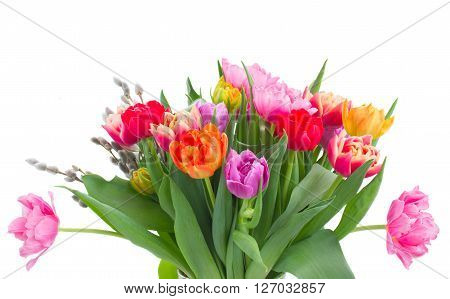 bunch of fresh pink, purple and red  tulip flowers with catkins isolated on white background