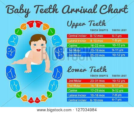 Baby prelimanary tooth eruption chart. Vector illustration. Editable image in bright colors on a blue background.Children teeth infographic with a funny smiling kid .