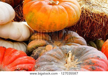 Different varieties of pumpkins/squash in a pumpkins patch