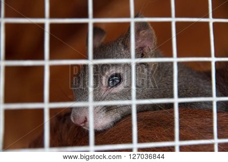Little squirrel in a cage in rescue station for animals