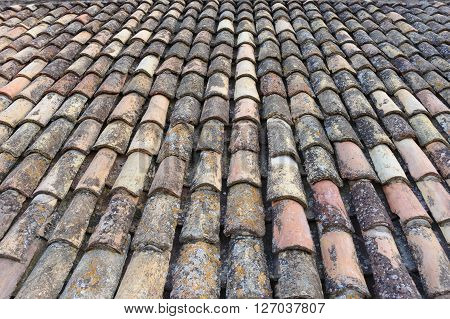 Algae lichen and efflorescence deposits on old clay roof tiles