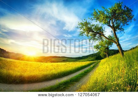 Idyllic rural landscape with meadows. blue sky a tree and a path leading to the horizon at sunset