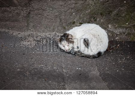 Poor Homeless Cat Sleeping On The Ground