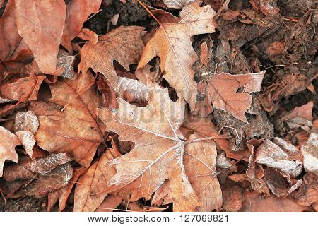 Pile of different dry leaves underfoot