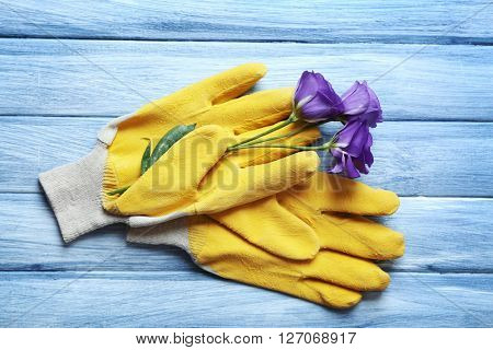 Yellow gardener's gloves and violet flower on blue wooden background
