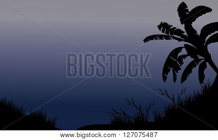 Banana tree and grass silhouette at the night