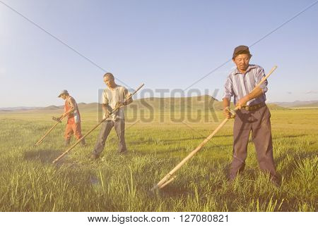 Three Mongolian Farmers Working Hard Concept