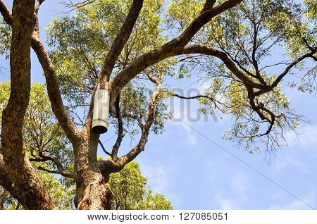Gardeners pruning tools affixed to a tree with green leaves and a blue sky background.